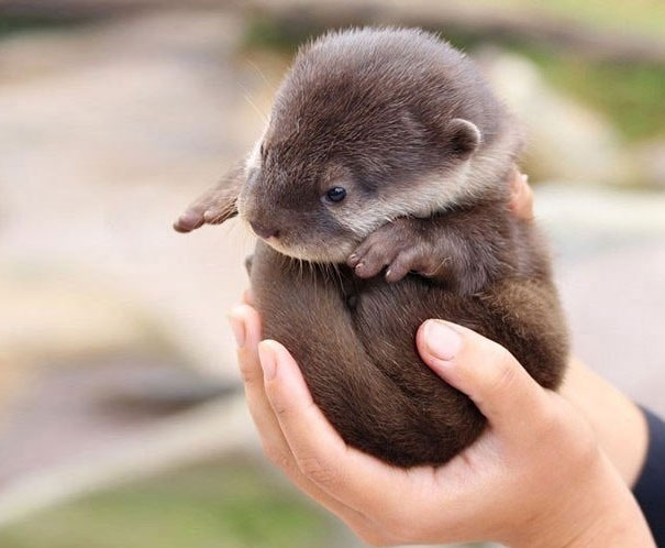 cute-baby-animals-palms-hands-53__605