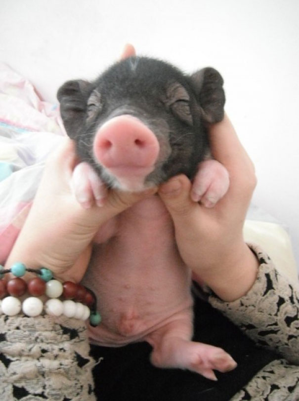 cute-baby-animals-palms-hands-591__605