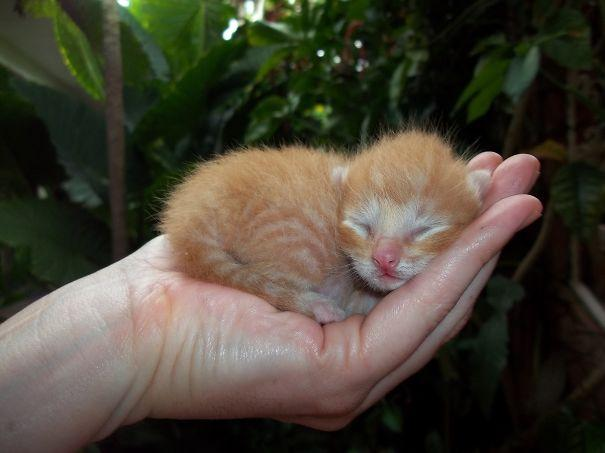 cute-baby-animals-palms-hands-60__605