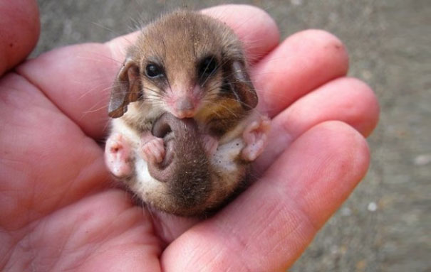 cute-baby-animals-palms-hands-64__605