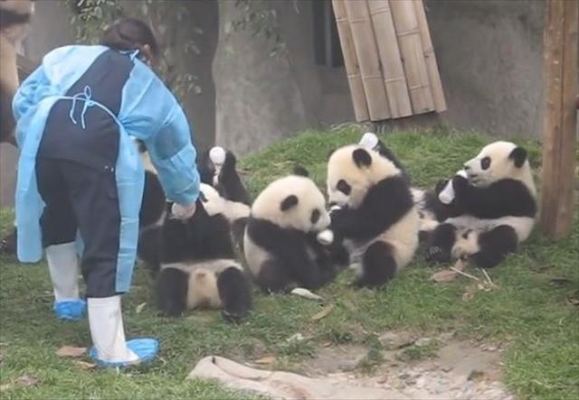 パンダにミルク