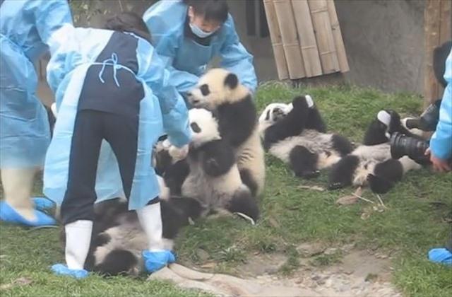 パンダにミルク2