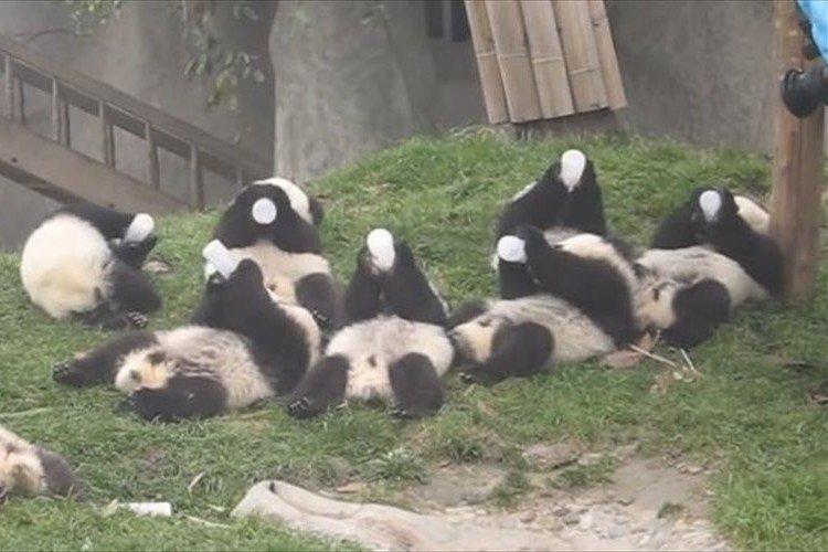 パンダにミルク3