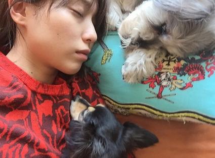 犬と戸田恵梨香
