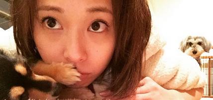 戸田恵梨香と犬