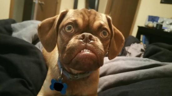 オラついた犬