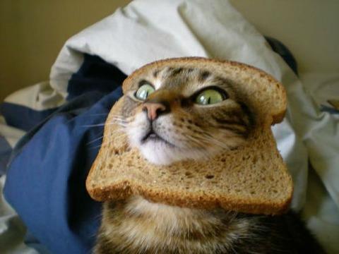 食パン猫15