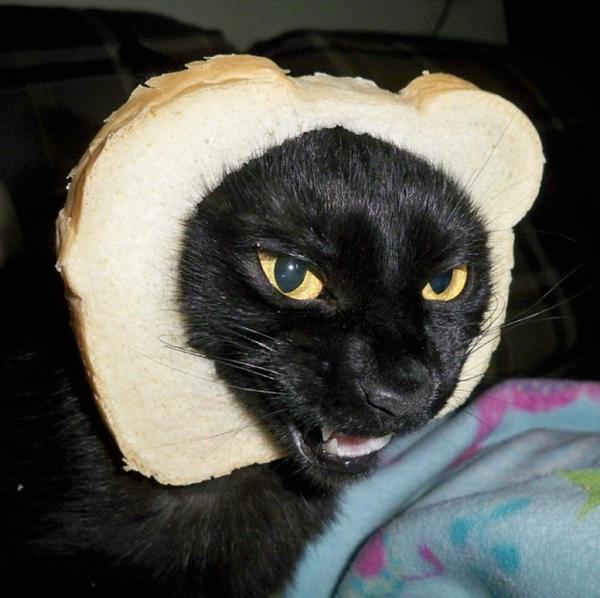 黒猫食パン