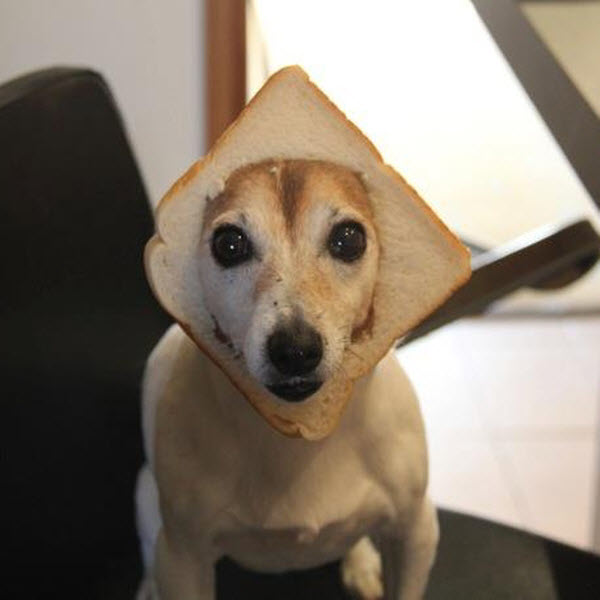 犬とパン4