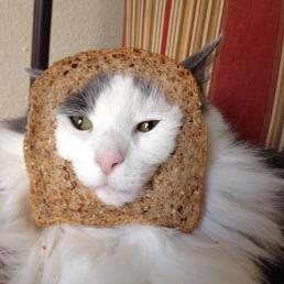 食パンにはまる猫2