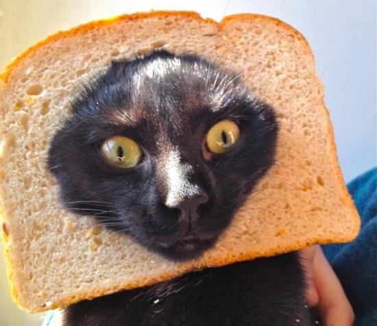 猫と食パン9