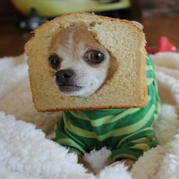 犬とパン3