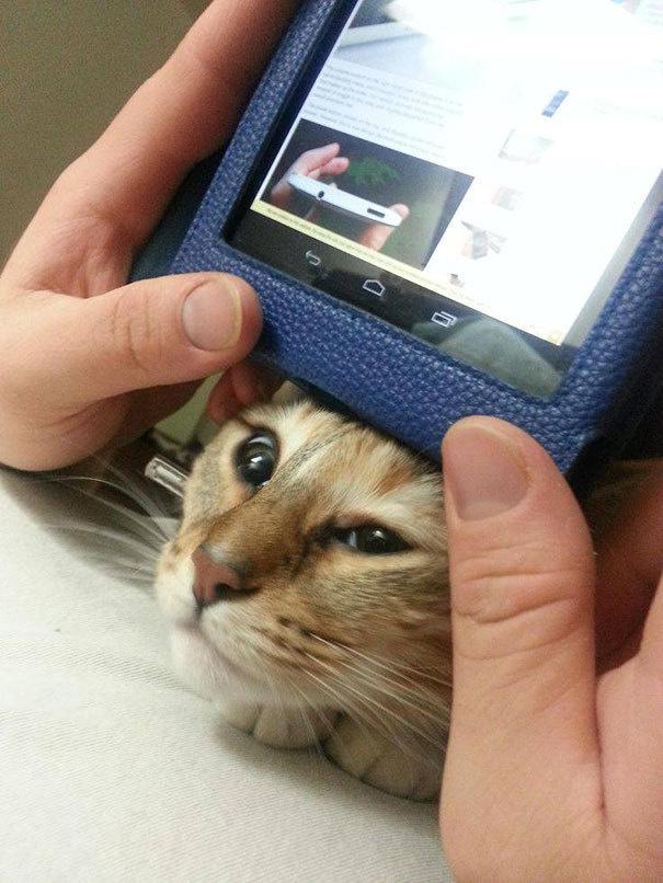 仕事の邪魔をしてくる猫