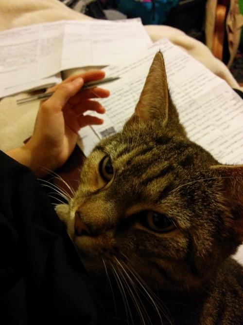 仕事の邪魔してくる猫11