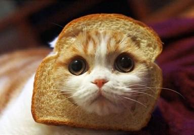 猫とパン13