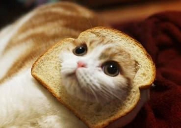 猫とパン14