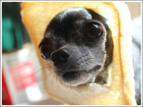 食パン犬28