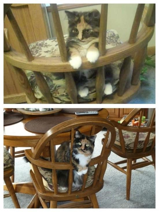 椅子の座り方が似ている
