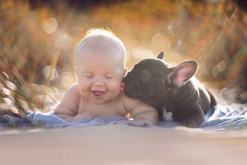 赤ちゃんと兄弟の犬1