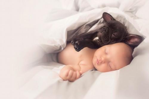 赤ちゃんと兄弟の犬5