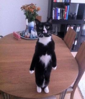 タチ猫15
