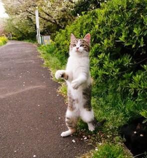 タチ猫16
