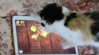 タブレットのゲームで遊ぶ猫
