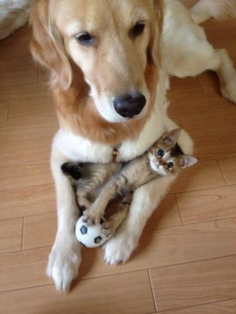 犬の腕の中で寝る猫