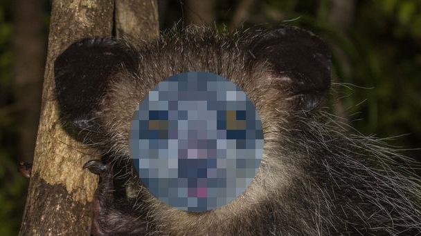 猿のアイアイ