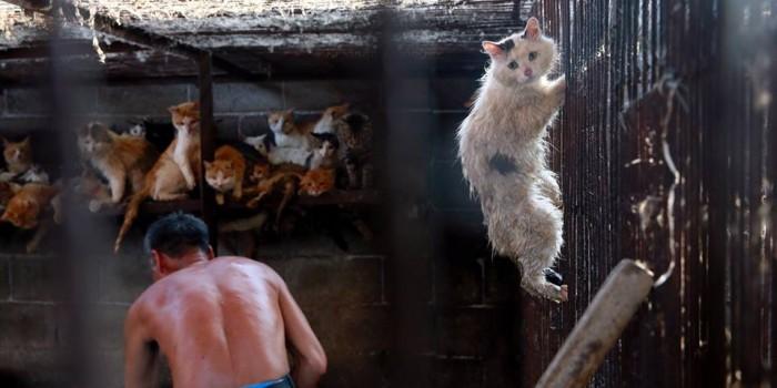フェンスにしがみつく猫