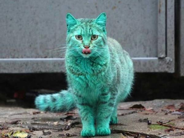 緑色をした猫