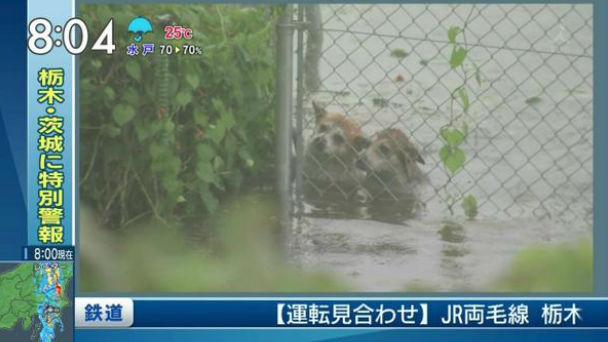 鬼怒川で犬が取り残される