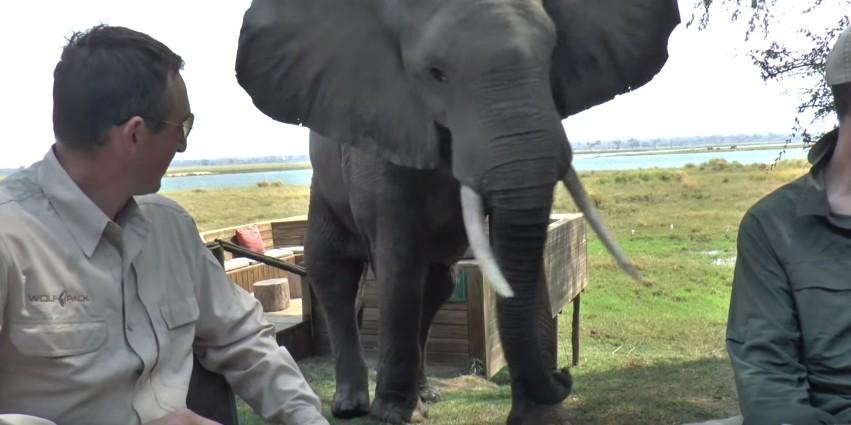 象が来ている