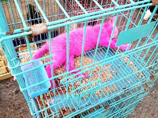 ケージに入ったピンクの猫