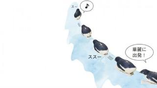 掃除とペンギン