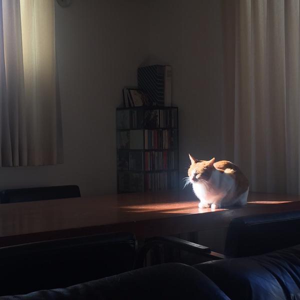 神々しい猫1