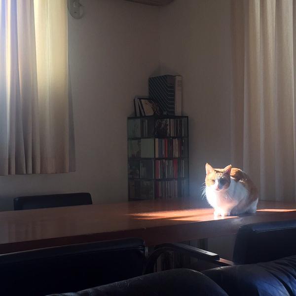 神々しい猫2