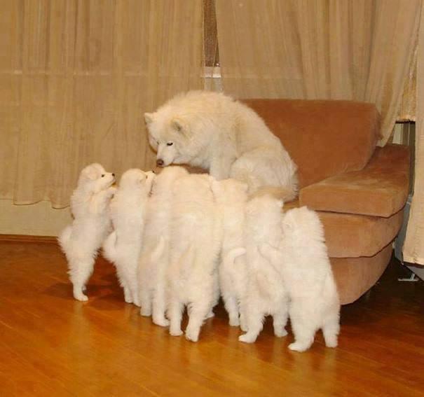 親犬が子犬を見守る2