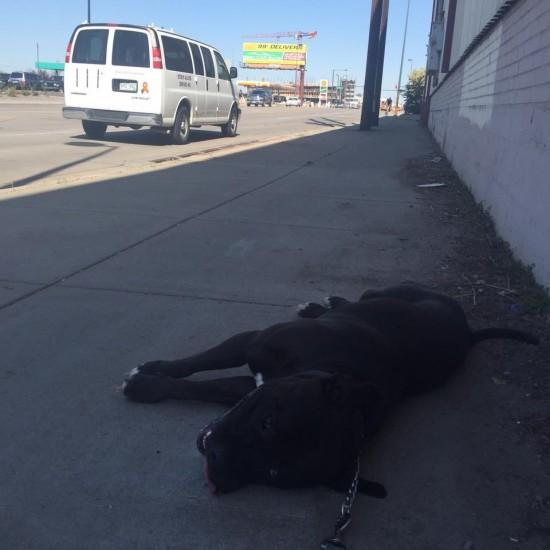 犬の散歩拒否4
