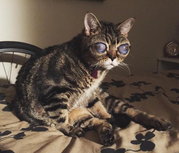 目が大きい宇宙人みたいな猫1