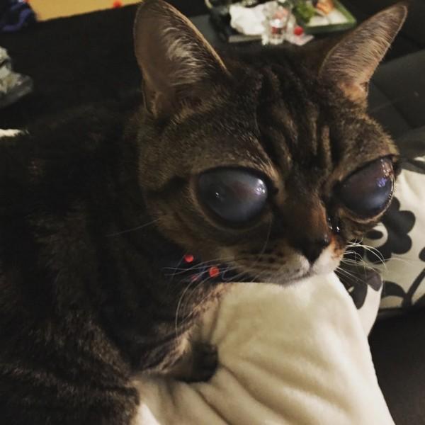 目が大きい宇宙人みたいな猫2