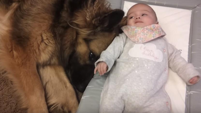 犬と赤ちゃん1
