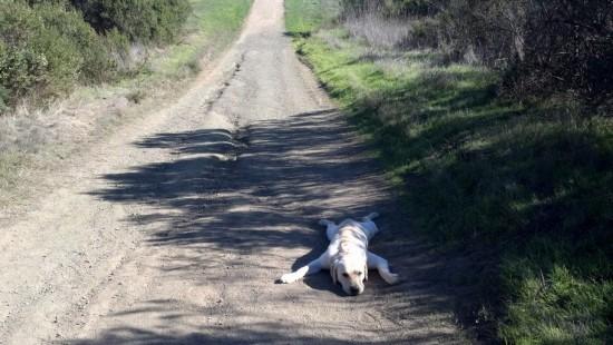 犬の散歩拒否3