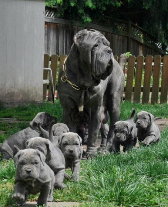 親犬が子犬を見守る11