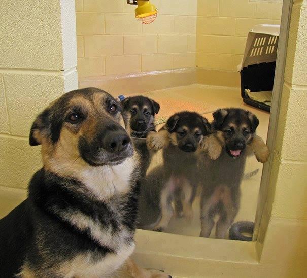親犬が子犬を見守る1