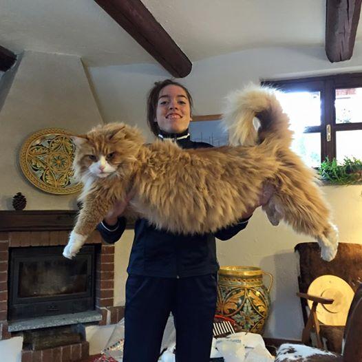 巨大猫メーンクーン2