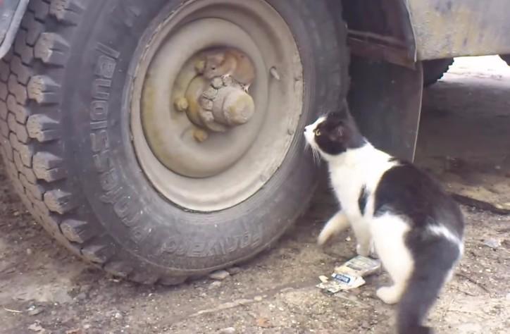 猫がネズミを発見