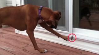 羽を恐れる犬