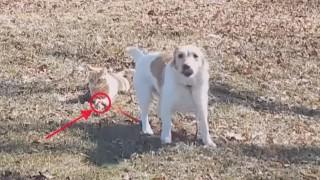 猫に引っ張られる犬