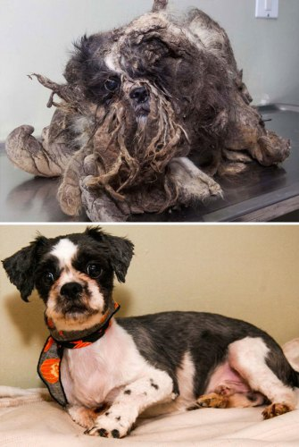 保護され劇的に変化を遂げた犬17